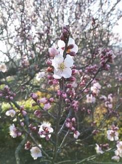 20140126 小石川植物園5.JPG