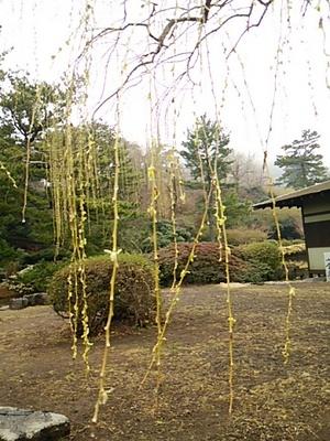 20150222 伊豆バスツアー5小室山公園3.JPG
