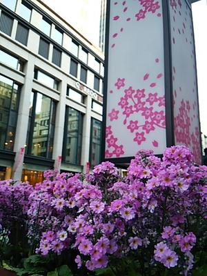20150327 桜まつり@日本橋.JPG
