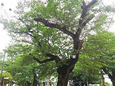 20150719 池上本門寺4.JPG