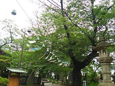 20150719 池上本門寺5.JPG