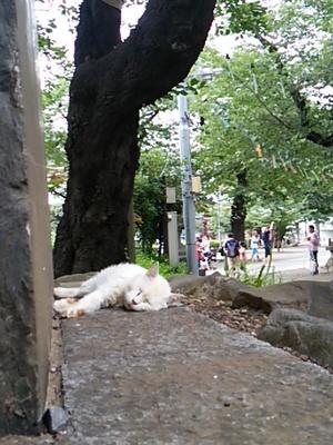 20150719 池上本門寺6.JPG
