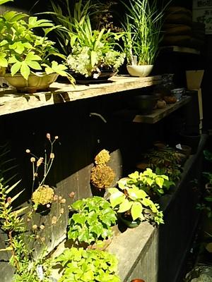 20150801 茶房野の花1.JPG