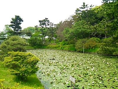 20160503 三渓園4睡蓮池&三渓記念館.JPG