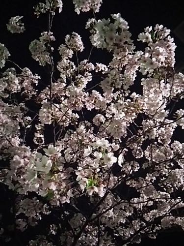 20170407 夜桜@麻布十番2.JPG