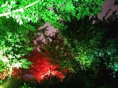 20180902 呼応する木々15.JPG