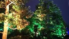 20180902 呼応する木々3.JPG
