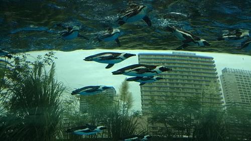 20180927 サンシャイン水族館13.JPG