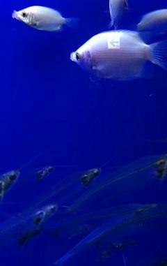 20180927 サンシャイン水族館24.jpg