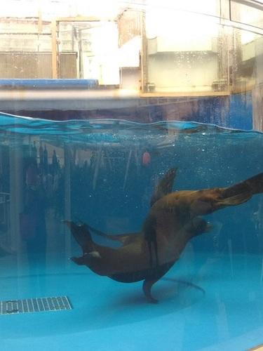20180927 サンシャイン水族館4.JPG
