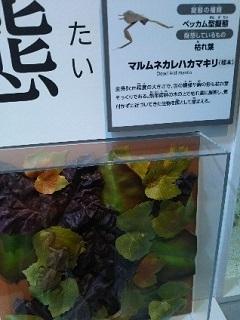 20180927 化ケモノ展1.jpg