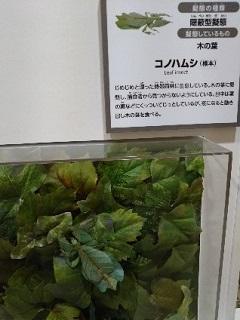 20180927 化ケモノ展2.jpg