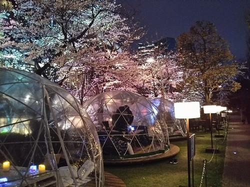 20190329 桜ライトアップ@東京ミッドタウン3.jpg