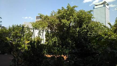 20190524  コマツビル屋上庭園1.jpg